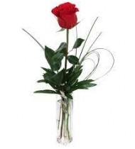 One Red Rose in Cristal Vase